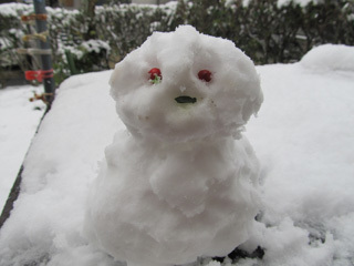 雪ダルマ,雪だるま,ゆきだるま,ユキダルマ,サクラソウ